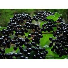 Бузина черная (плоды)